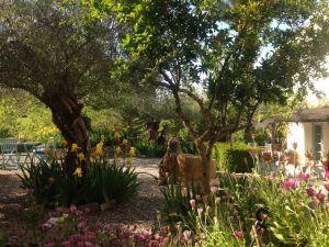 alcantarilla garden